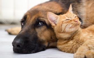 cane-e-gatto-convivenza