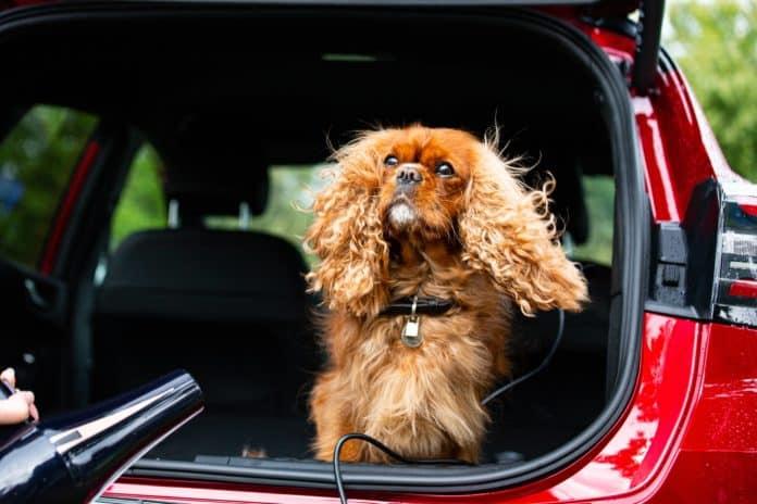 perro ford